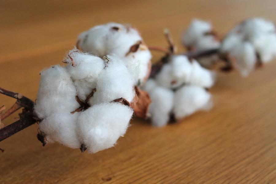 Brasil treina peruanas em inovações para setor algodoeiro