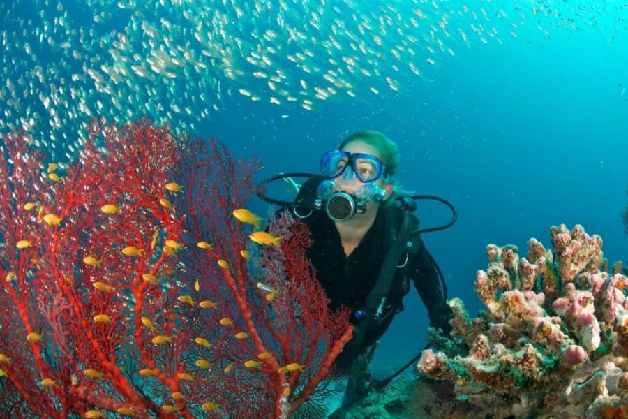 Concurso da ONU busca inovações contra poluição nos oceanos