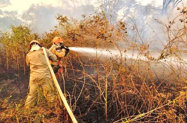 incêndios - Pantanal
