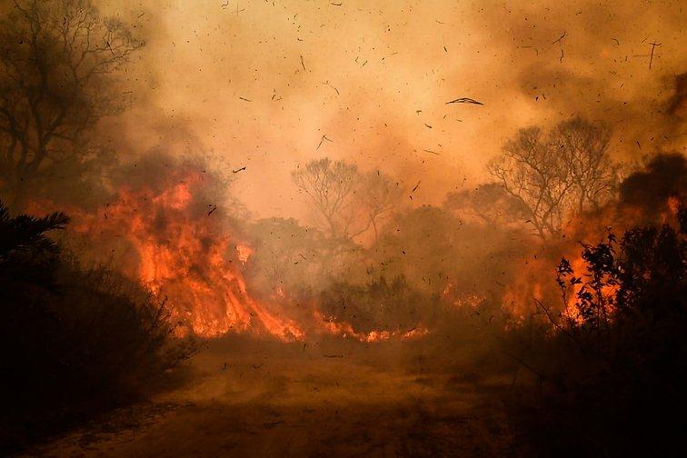 Os pesquisadores alertam também que a seca no pantanal deverá durar anos e ter graves consequências para a fauna, a flora e as comunidades