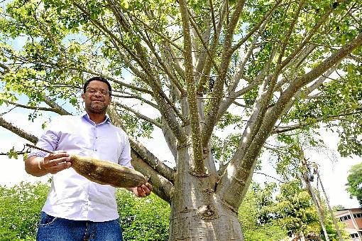 Professor do DF André Lúcio Bento identifica os baobás símbolos - culturais do continente africano - existentes na capital Foto: Reprodução
