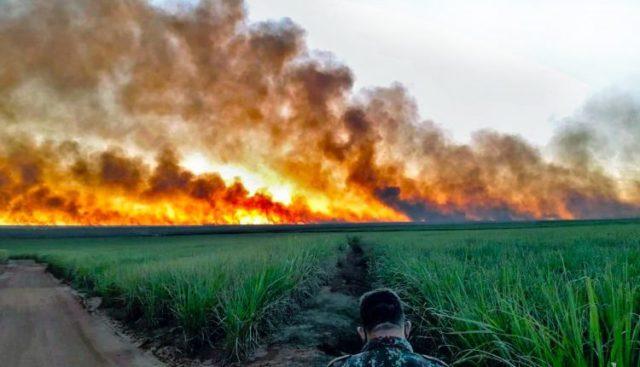 Incêndio no Pantanal - Foto: Divulgação